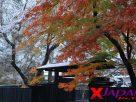 ย้อนเวลาที่หมู่บ้านซามูไรคะคุโนะดาเตะ